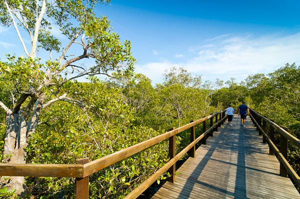 Lota Board Walk through the Mangroves