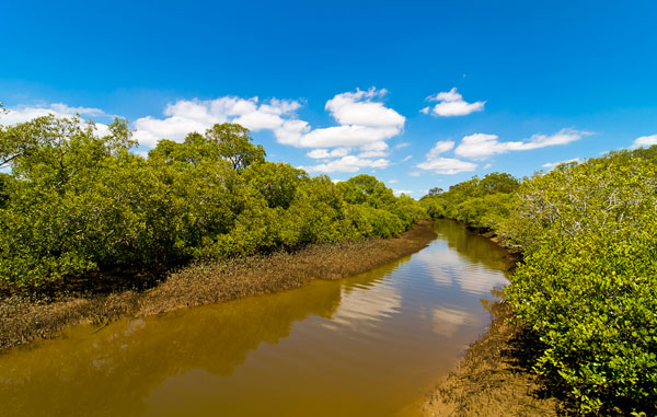 Lota Mangroves