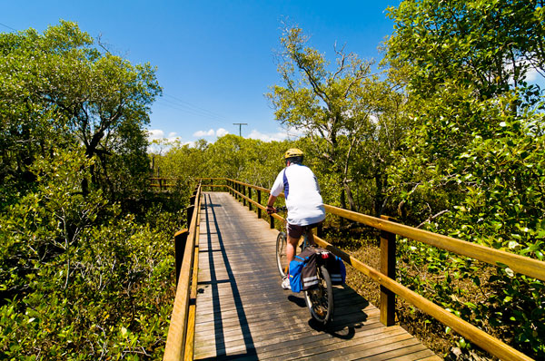 Lota Mangrove Boardwalk